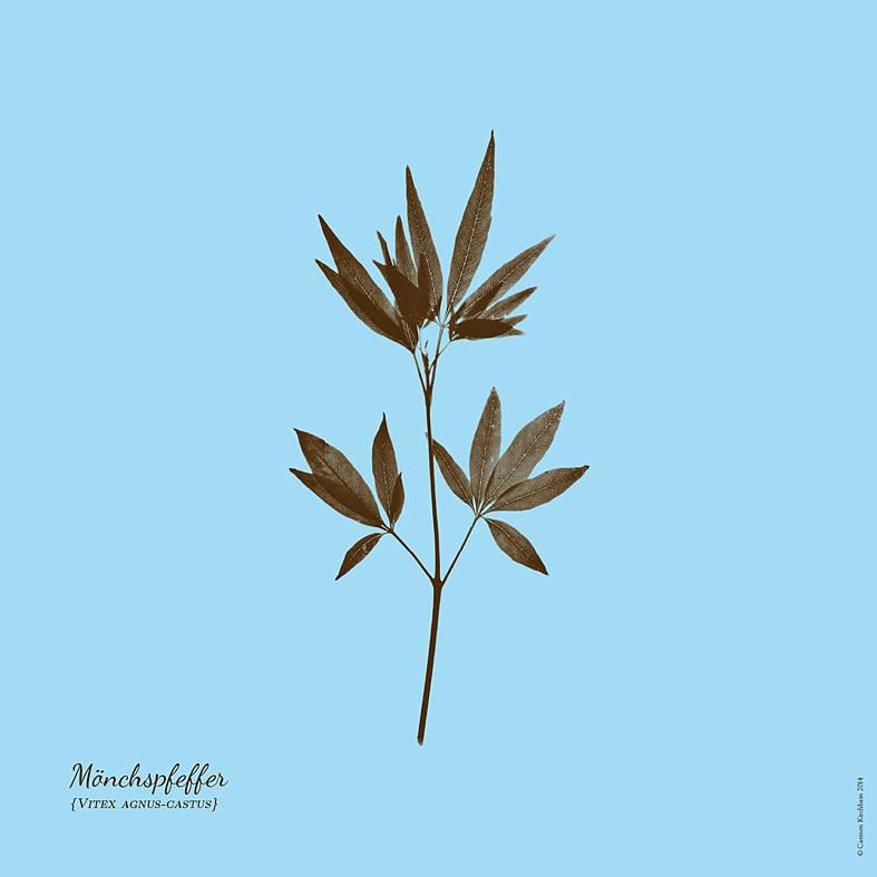 ckirchhain_herbarium01
