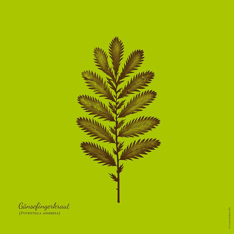 ckirchhain_herbarium02