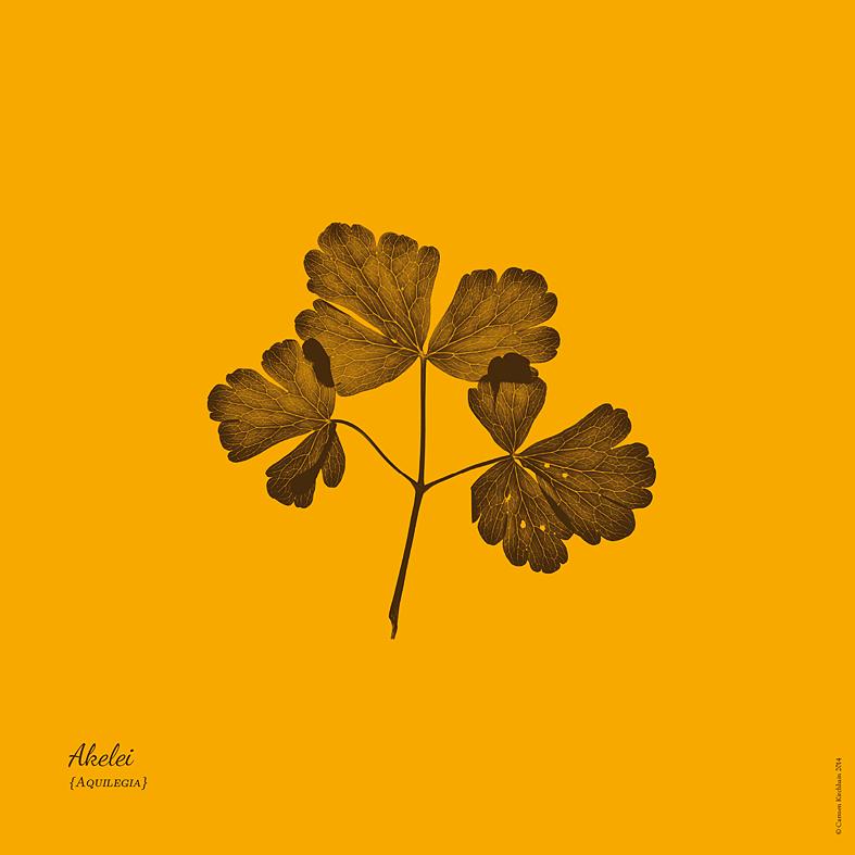 ckirchhain_herbarium03