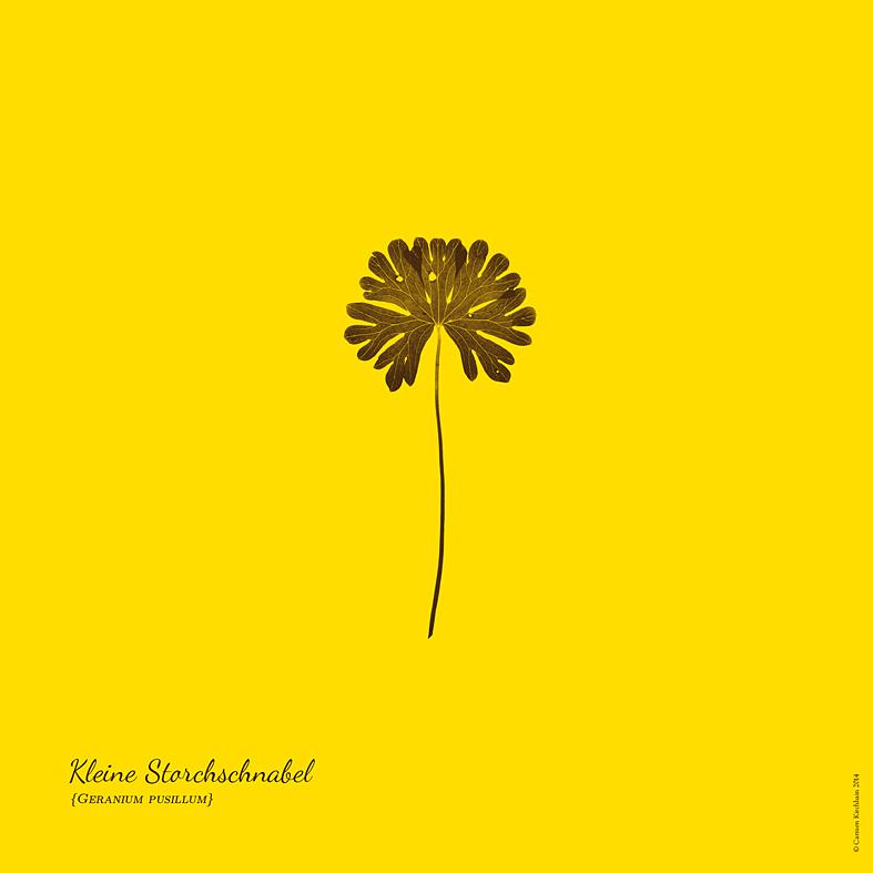 ckirchhain_herbarium04