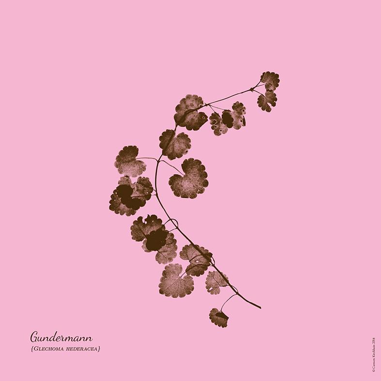ckirchhain_herbarium05