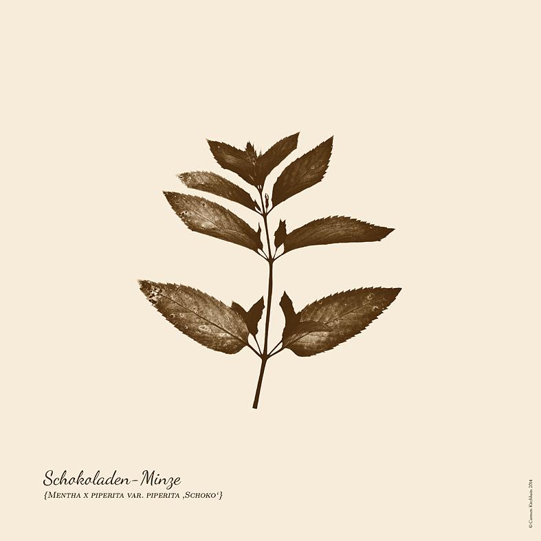 ckirchhain_herbarium06