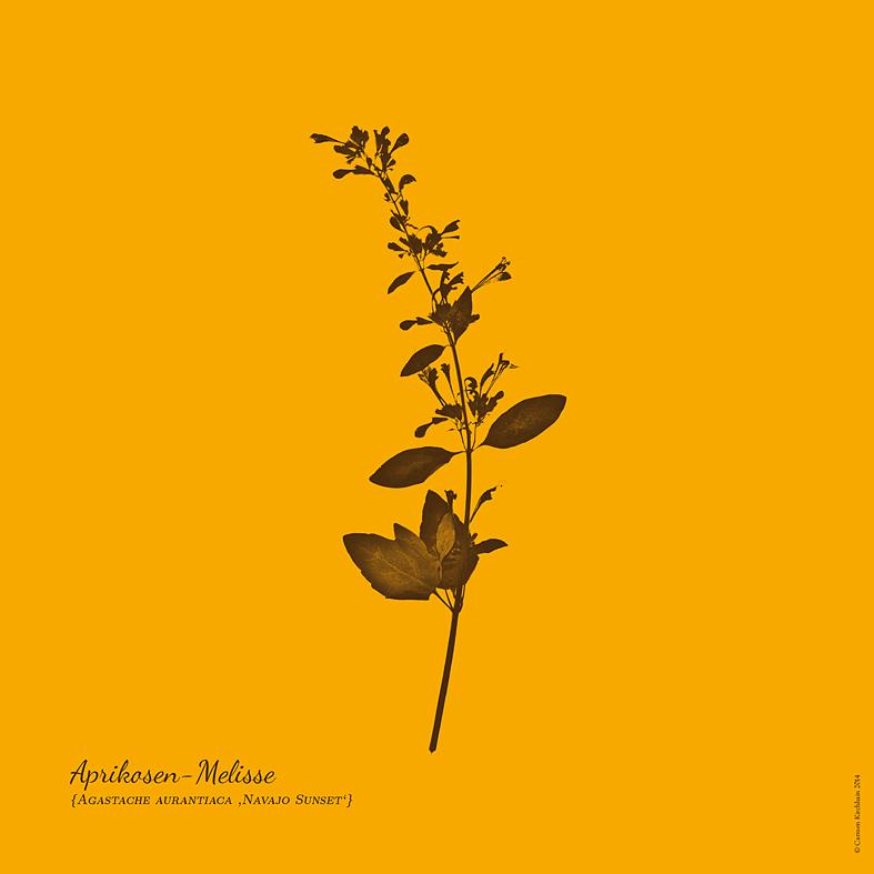 ckirchhain_herbarium07
