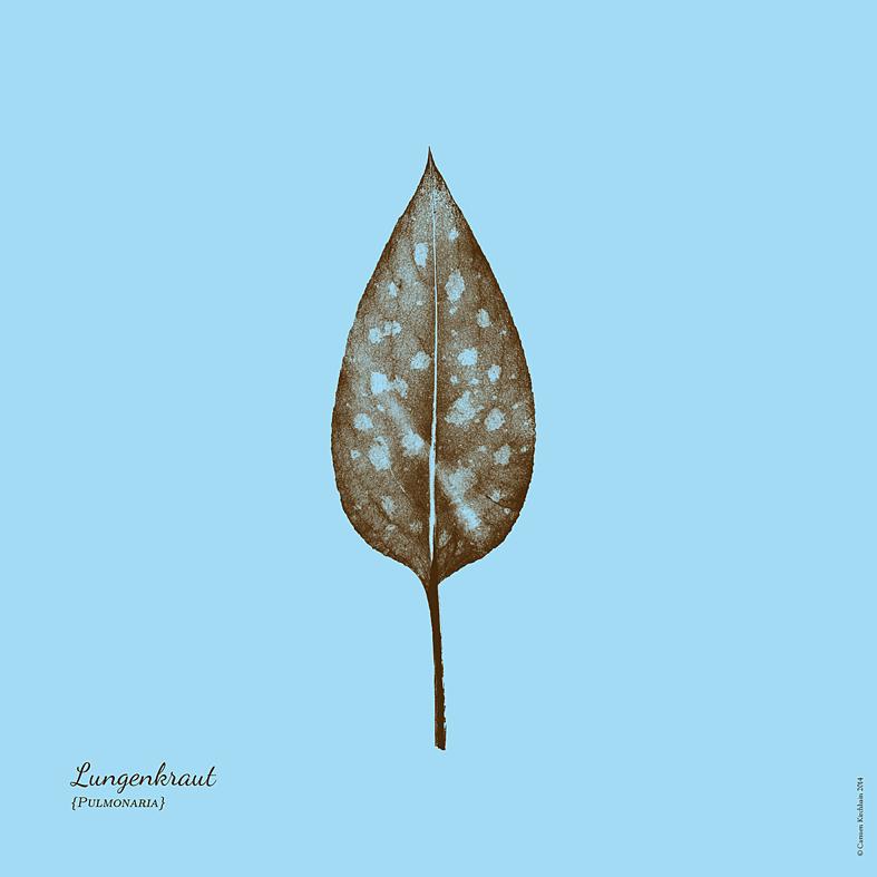 ckirchhain_herbarium10