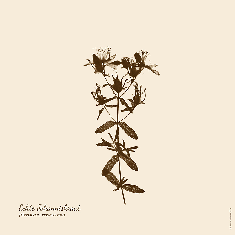 ckirchhain_herbarium11